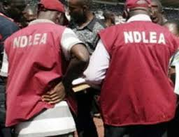 A serving officer (NDLEA) has been arrested for selling assorted illicit drugs and six others arrested for drug dealing